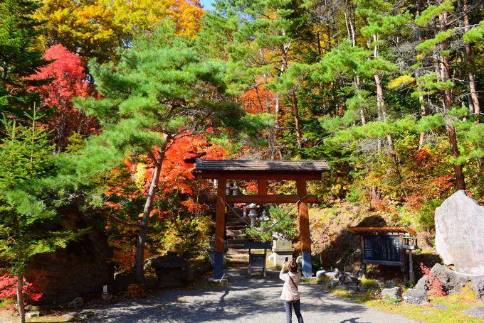 燃えるような紅葉の山!美林に囲まれた開拓神社と紅桜公園の生い立ち