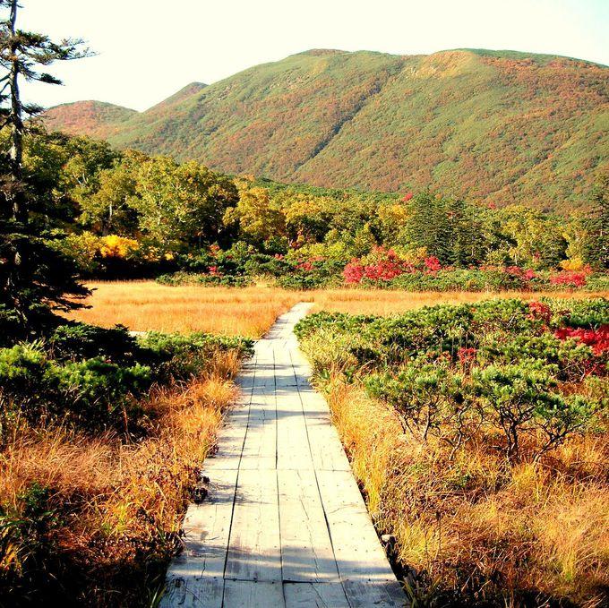 秋色遊歩道を散策!