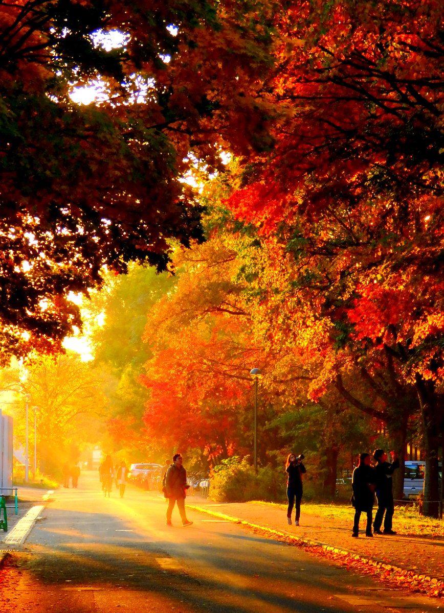 名もなき並木路も美しい!思わず足を停めてしまう紅葉並木