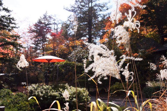 「紅桜公園」の見頃と見どころ