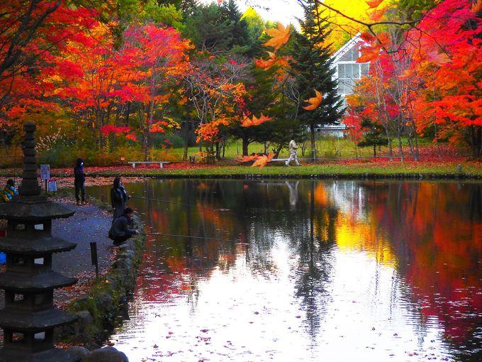 「紅桜公園」には釣り堀、日本庭園、数寄屋造の茶室も