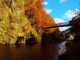 美しさ2種類。定山渓温泉 二見吊橋の紅葉&ライトアップ|北海道|トラベルjp<たびねす>