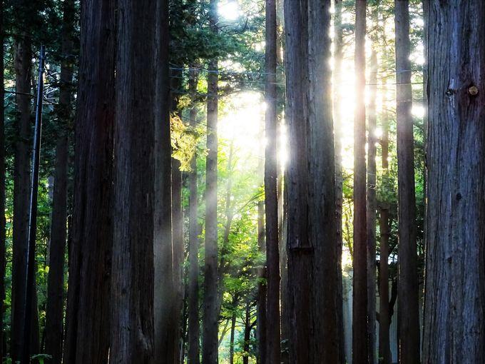 春は梅と桜のお花見、秋は紅葉スポットへ。「北海道神宮」と隣接する「円山公園」