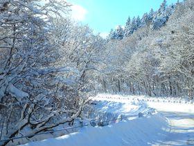 新千歳空港から支笏湖への道道16号線が「霧氷ロード」に!冬も美しい支笏湖への誘い|北海道|トラベルjp<たびねす>