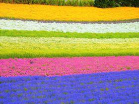 レインボー超えの花畑・富良野「ファーム富田」はSNS映え抜群|北海道|トラベルjp<たびねす>