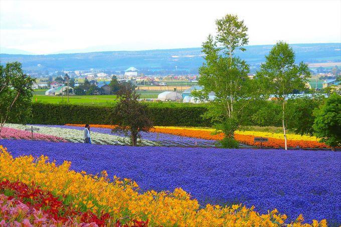 お花畑の奥に見える雄大な富良野の景色も必見
