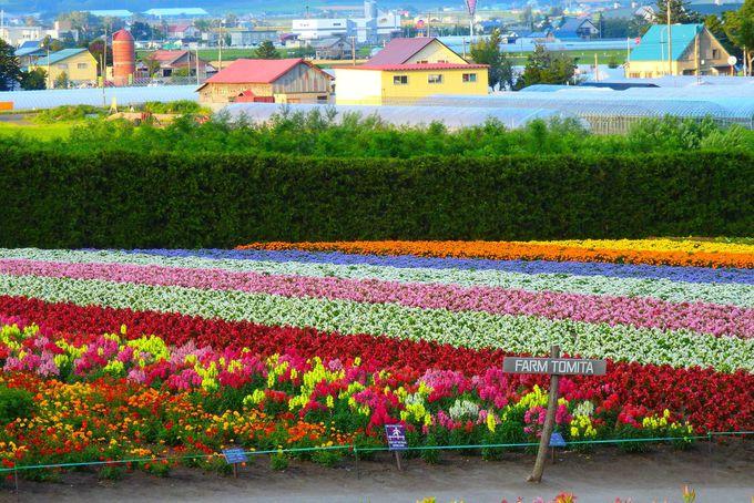 鮮やかなお花畑は7月を過ぎても…