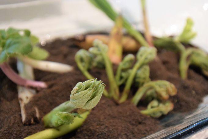 土も食べられるの?風味豊かな大地の正体は…