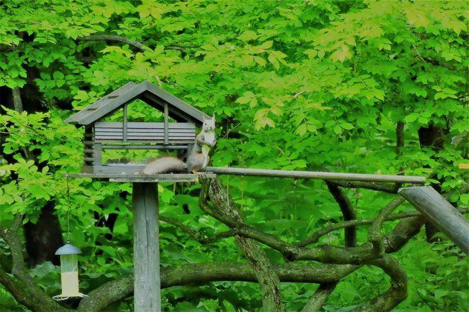 エゾリスも顔を出す自然豊かな庭