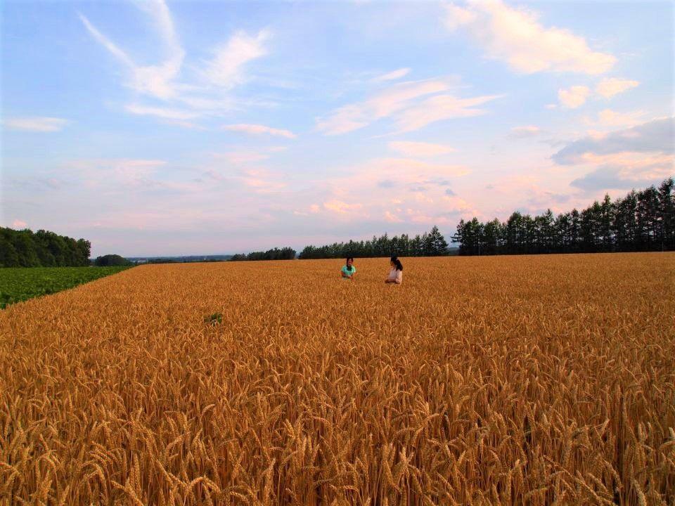四季折々の畑の魅力を体験!