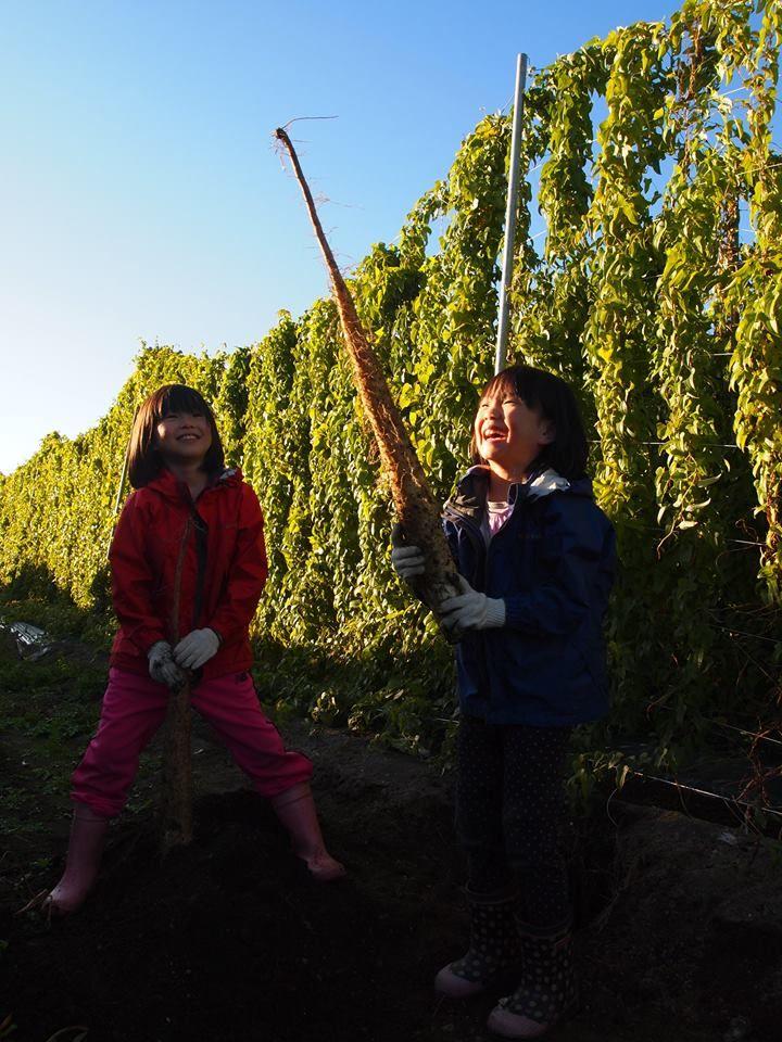 その場でパクッ!自由研究にもおすすめの収穫体験