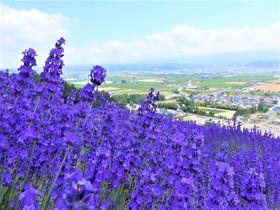 お土産はジャガイモ1箱・富良野「リゾートイン・ノースカントリー」|北海道|トラベルjp<たびねす>