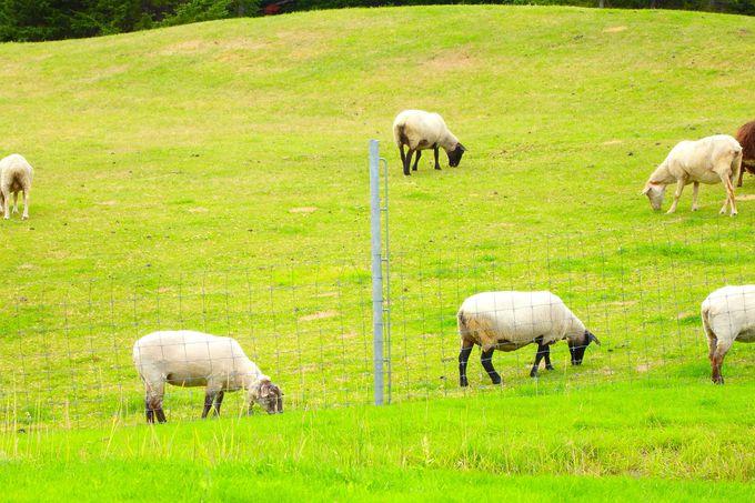 2017年シーズン新登場「牧草ベッド」が大人気で期間延長!