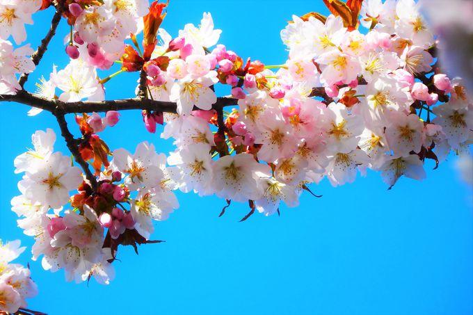 GWは家族でお花見!札幌「モエレ沼公園」の大自然アートに触れる