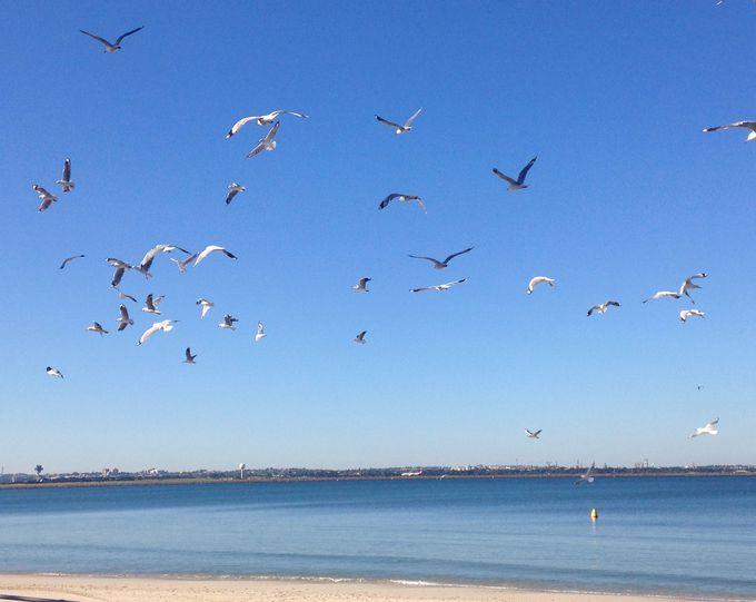 ブライトン・ビーチ(Brighton Beach)は、飛行機マニア必見!