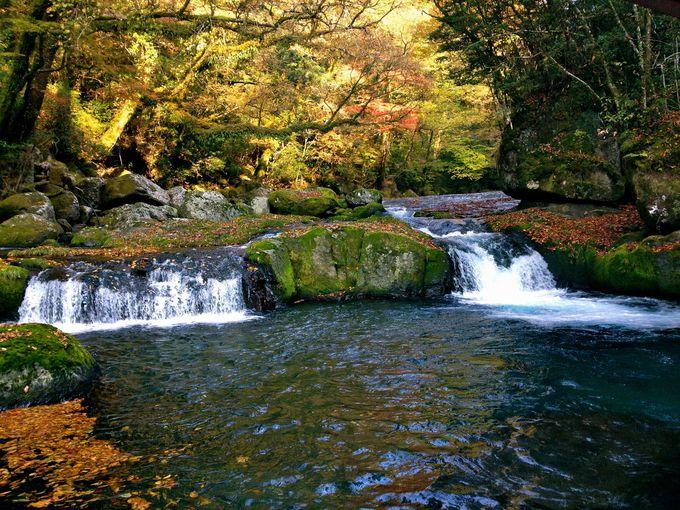 景観が美しいマイナスイオンの宝庫!日本名水百選の観光地「菊池渓谷」