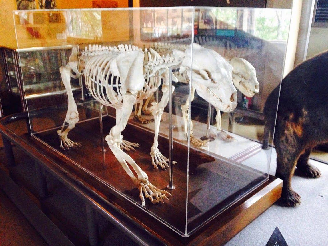 ヒグマ博物館で、ヒトとヒグマの歴史に触れる