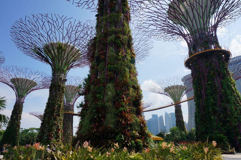 シンガポールの新しい観光名所『ガーデンズバイザベイ』を味わいつくす!