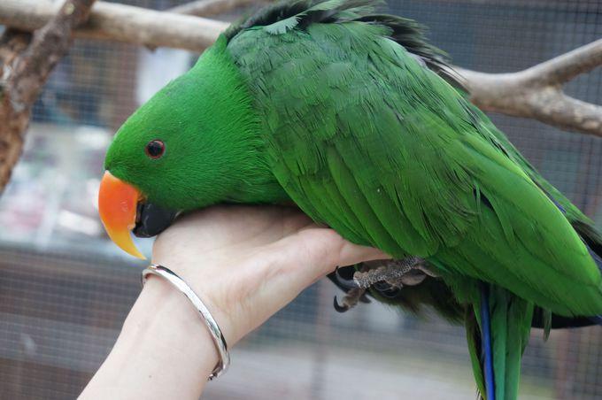 カラフルな南国の鳥達と戯れる!頭や肩に止まってくるかも?