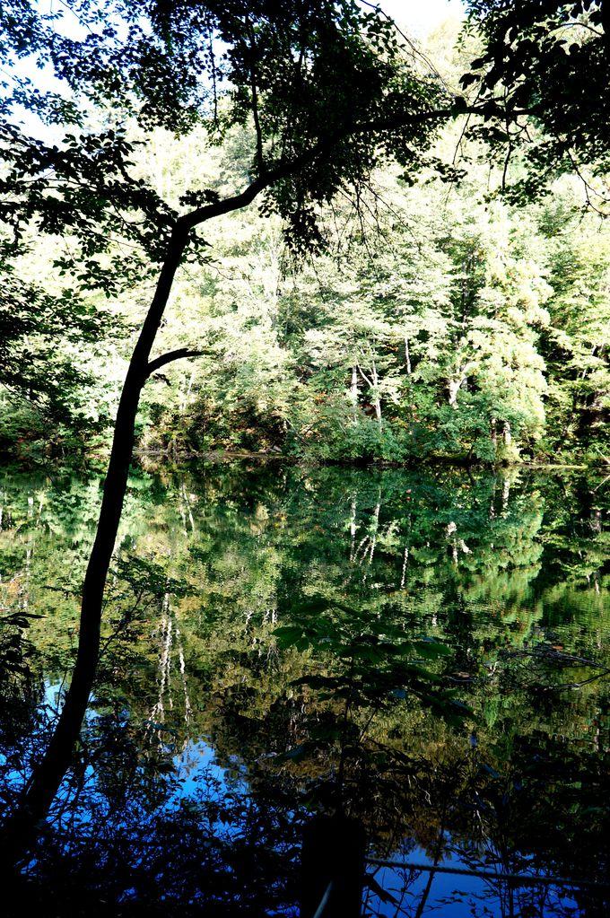 全国名水百選の一つ、龍が作ったという言い伝えのある「龍ヶ窪池」