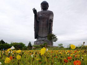 茨城県にある世界一の「牛久大仏」と花と動物に癒される!|茨城県|トラベルjp<たびねす>