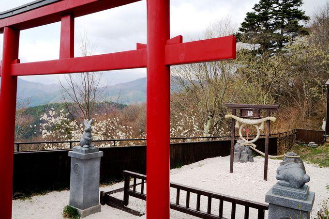 うさぎ神社にたぬき茶屋、かわらけ投げも楽しんでみては?