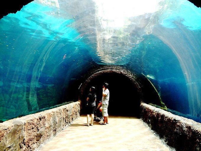 淡水生物の動物園として世界最大の規模!世界に広がる8つの大河に旅に出よう!