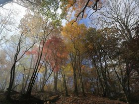 日本百名山!神奈川・丹沢の紅葉を眺める鍋割山稜登山
