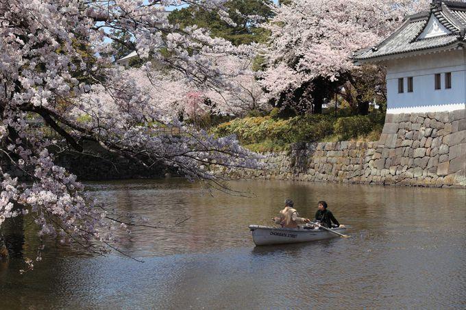 桜の時期に訪れたい小田原城址公園