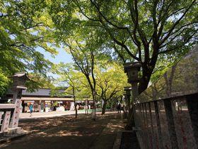 神奈川・丹沢「大山歩き」で爽快トレッキング!|神奈川県|トラベルjp<たびねす>