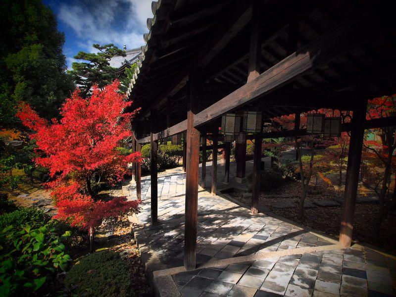 隠元禅師が開いて350年。中国渡来の大寺院・黄檗宗萬福寺でゆっくり紅葉を堪能!