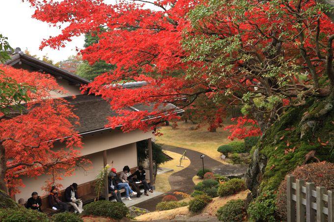 苔庭も紅葉も美しい!「箱根美術館」は庭園も美術作品