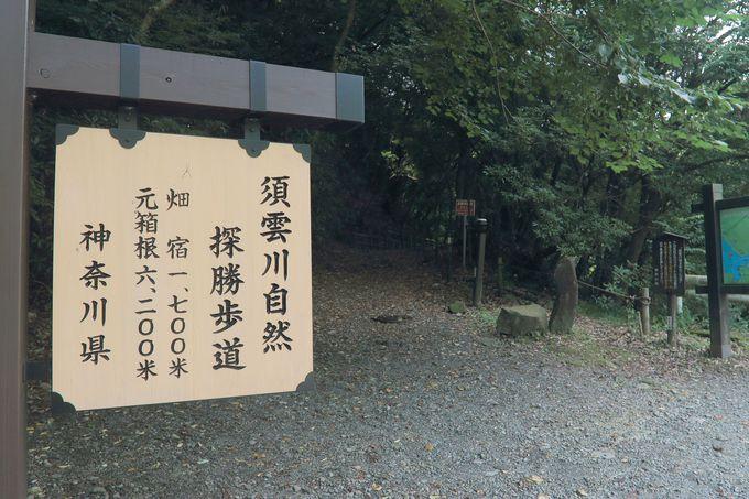 東海道五十三次は徳川家康が整備した旧東海道!