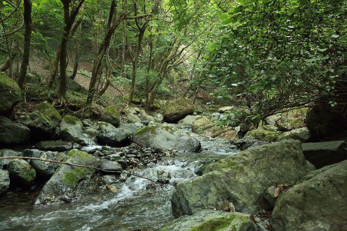 四十八瀬川沿いをたどり、後沢乗越から本格的になるルート