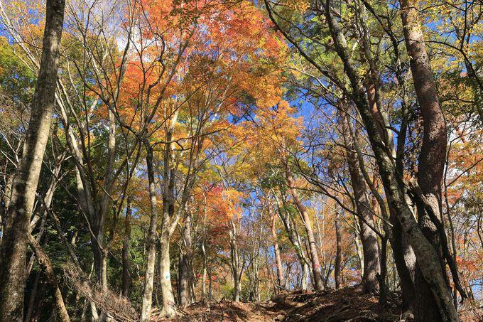 大自然の宝庫・丹沢周辺で、ハイキングに登山、そして温泉!