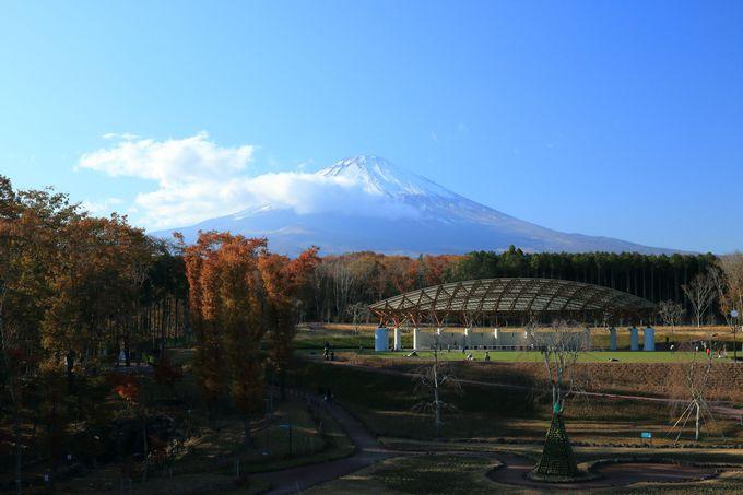 隣接する「富士山樹空の森」も家族連れは必見の場所