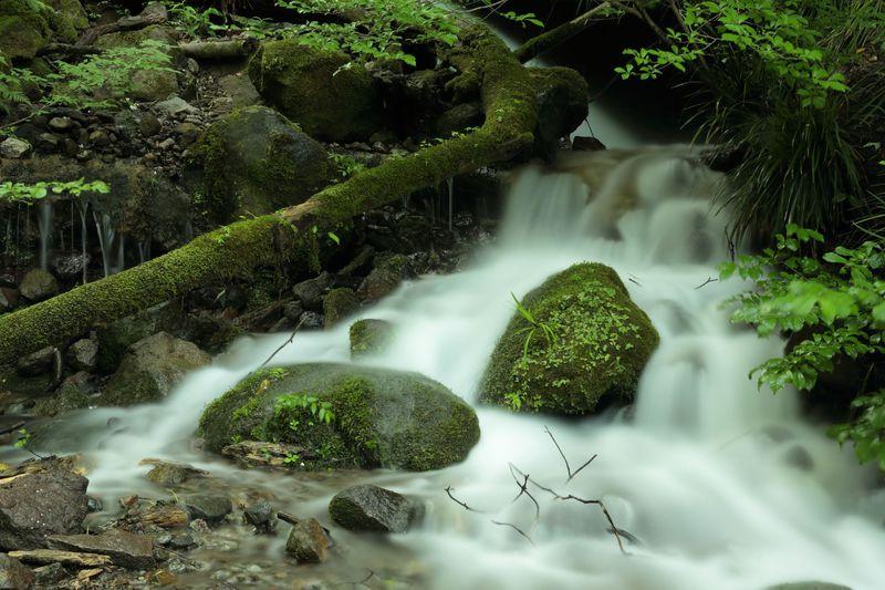 2つの滝と満開アジサイの、素敵な箱根町湯坂路トレッキング