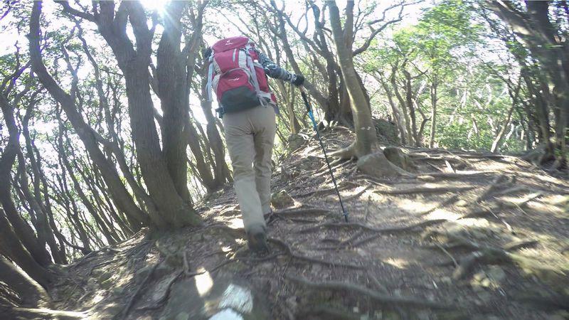 沼津アルプス縦走は、侮れない山の楽しさが詰まっている!