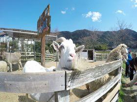 自然と動物が迎えてくれる静岡函南「酪農王国オラッチェ」!|静岡県|トラベルjp<たびねす>
