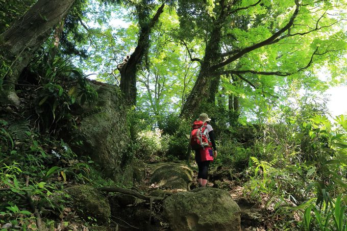 第3紀地層のれき岩が全山に分布!驚きと楽しさの石老山ハイキング