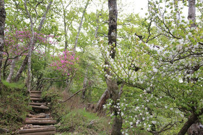 西丹沢地域で人気の登山道!つつじ新道は初心者でも可能!