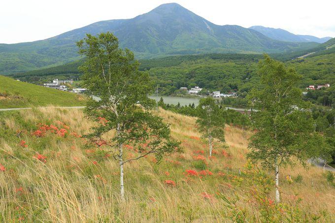 高原帯の植生や風情は日本屈指の素晴らしさ!