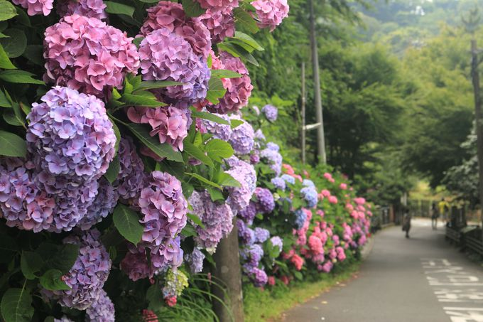 四季折々の草花も必見!鎌倉時代の都の構造を探訪する