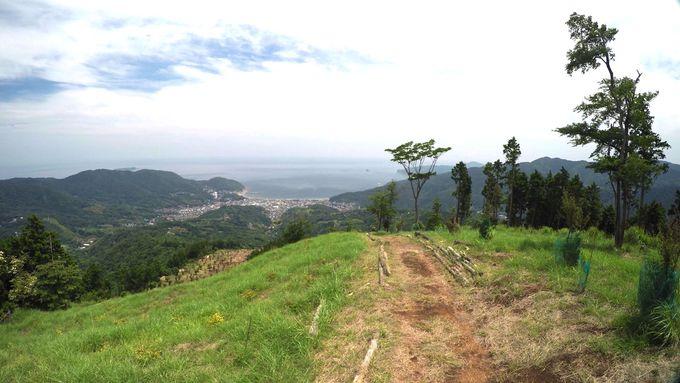 海抜0mからみかんの花咲く丘を越え大丸山山頂503mを目指す!
