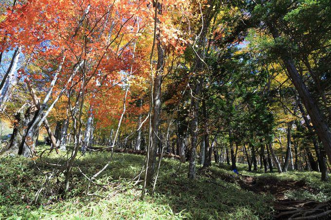 寒暖の激しい地域の紅葉の美しさは格別