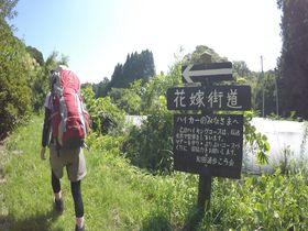 縁結び新日本百名山!千葉「花嫁街道」希少なマテバシイ純林も