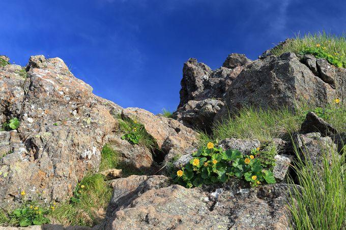絨毯のような雲海をその目で!雄大なスケールの山頂の景色