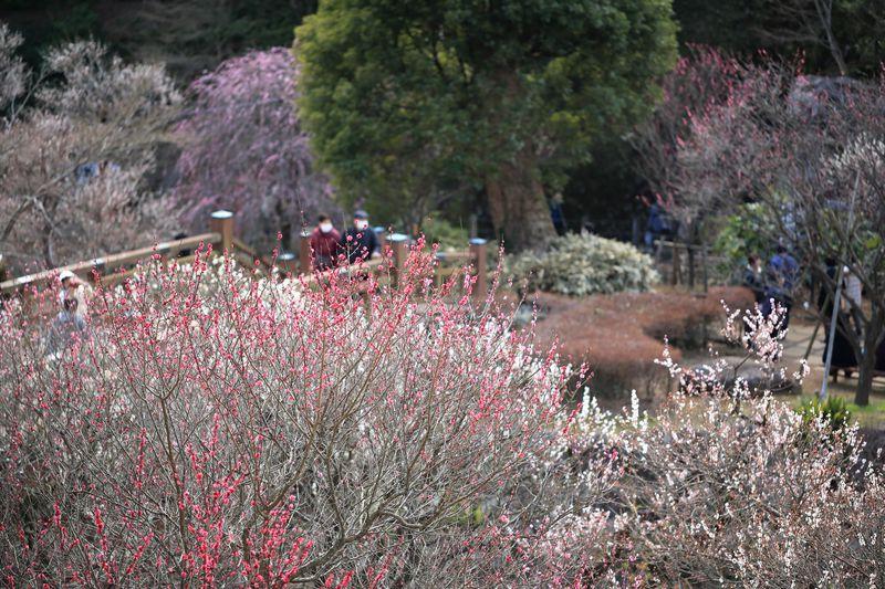 梅も桜も早咲き日本一!春の熱海を満喫できるスポット3選