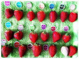 アロマにビーナスハート!千葉・ドラゴンファームで苺20種食べ比べ&いちご大福作り|千葉県|トラベルjp<たびねす>