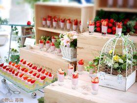 苺畑でいちごスイーツ食べ放題!?ヒルトン東京ベイの「ストロベリー・フィールド」でいちご狩り!|千葉県|トラベルjp<たびねす>